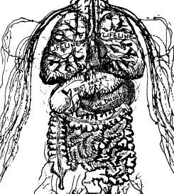 Julien Serve, Assembly Drawing (2018), Impression numérique sur papier vélin, 70x50 (schéma anatomiquerevisitéd'unmammifère humainoccidental, une autopsie névrotique 2.0.)